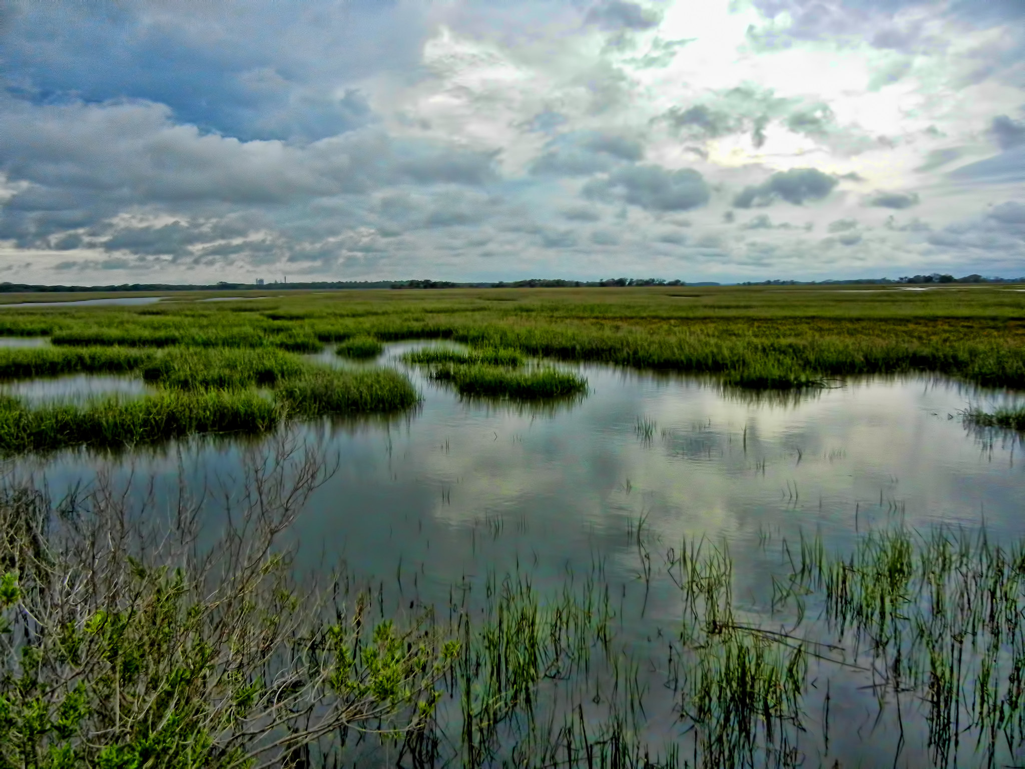 Salt-marsh At Cumberland Island National Seashore